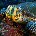 Planeta Azul Selvagem T2: Ep.5. Indonésia: Amazonas dos Mares